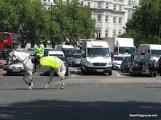 Horse Stopping Traffic.JPG