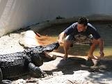 Aligator Wrestling - Fort Lauderdale.JPG