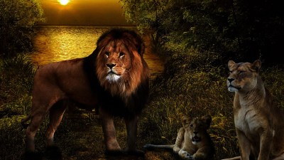 Lions Live Wallpaper - Android Apps on Google Play