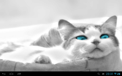 White Cats Live Wallpaper - Android Apps on Google Play