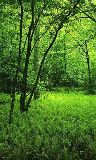 3D Forest HD Live Wallpaper - Android-apps op Google Play