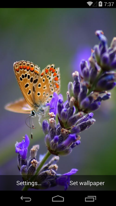 Butterflies Live Wallpaper - Android Apps on Google Play