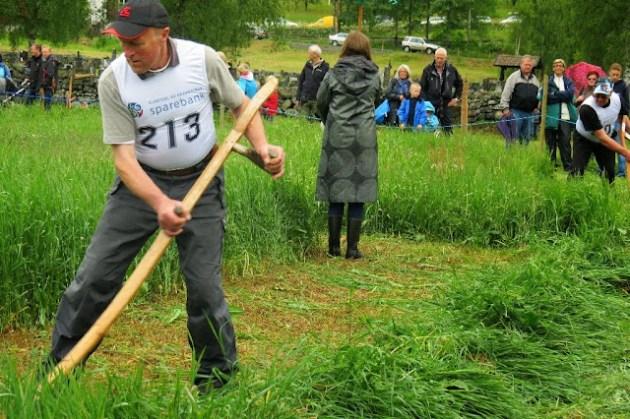 Kosidba u Norveskoj- Turisticka organizacija opštine Ljig248