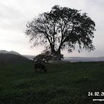 PICT5308.JPG