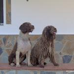fotos para el mundo del perro 003.jpg