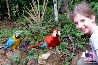 The parrots of Otorongo Lodge