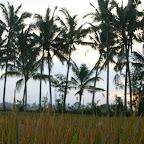 0427_Indonesien_Limberg.JPG