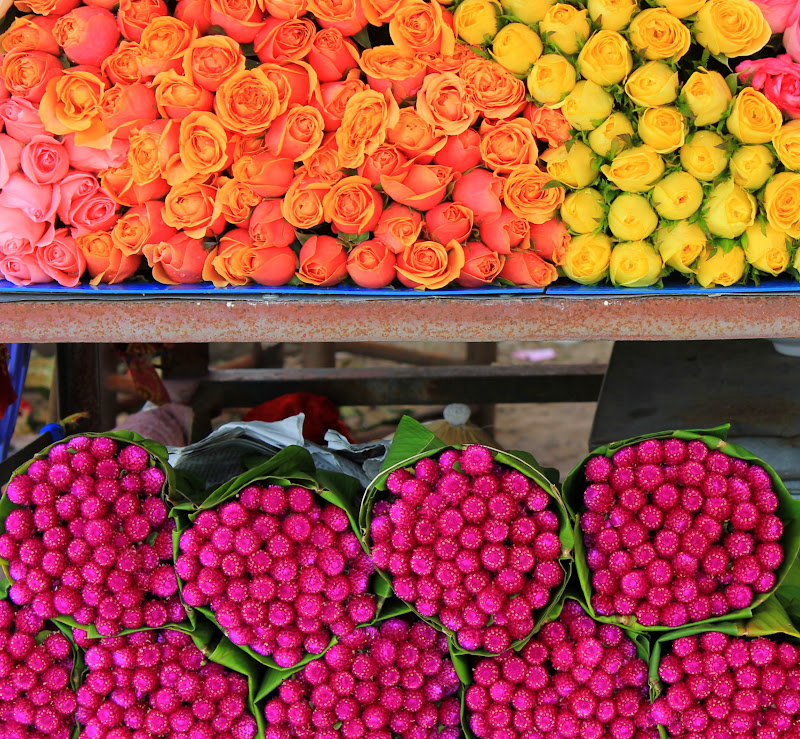 Roses, hydrangea, orchids and gladioli are some of the flowers of Da Lat