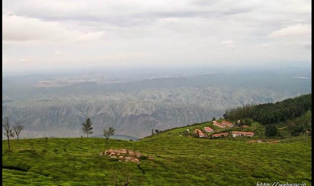 tea-plantations kodanadu