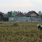 0418_Indonesien_Limberg.JPG