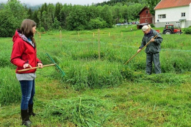 Kosidba u Norveskoj- Turisticka organizacija opštine Ljig176