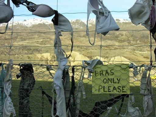 Ribuan Bra Tergantung Nganggur di Pagar Kawat di New Zealand