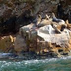 A family of Sea lions