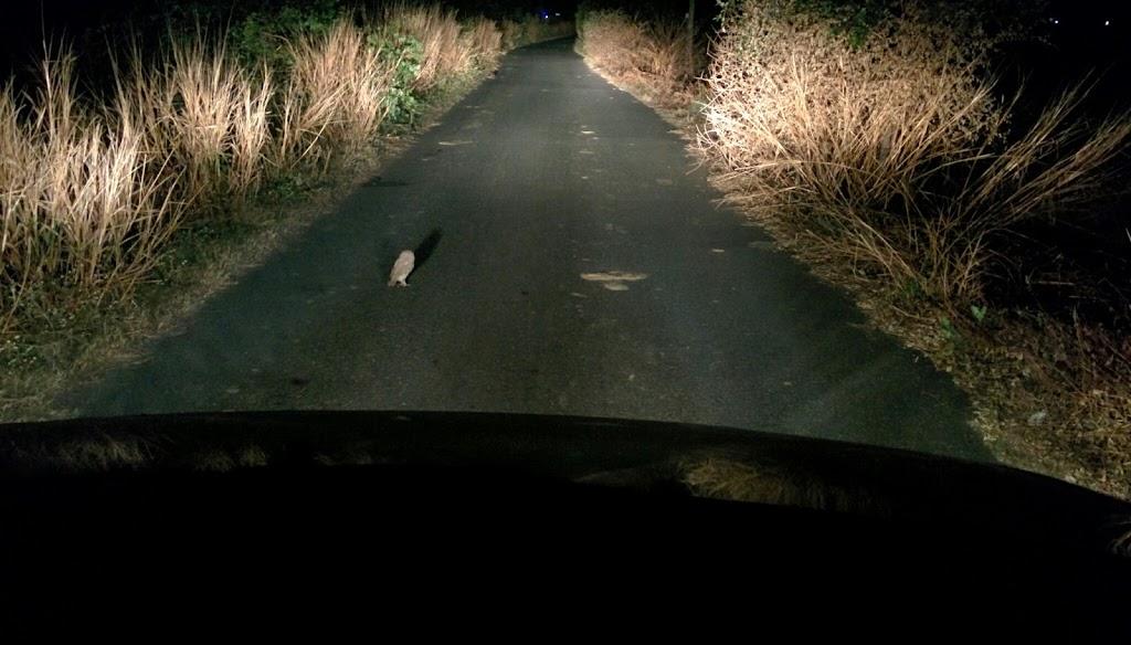 Crazy owl blocking my path