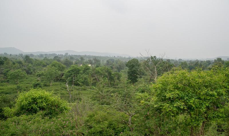 The Bandipur Tiger Reserve