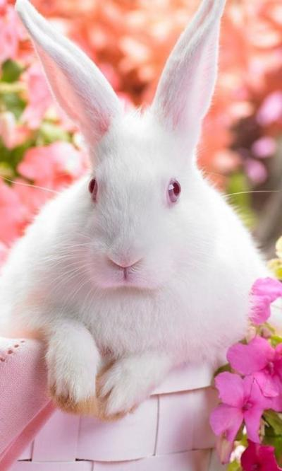 easter bunny live wallpapers - Android Apps on Google Play