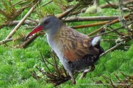 Reserva Thomas Van der Hammen, hogar de  aves…