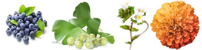 Obat Buta Warna Herbal Tanpa Oprasi