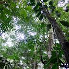 The jungle canopy
