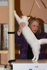 Omkara La Flaca of Bearcloud on show in kitten class @ 7 months