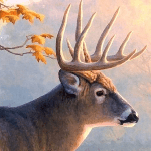 live deer wallpapers - Android Apps on Google Play
