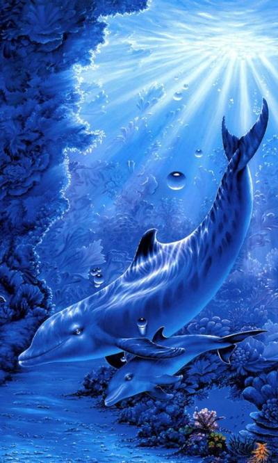 dolphins live wallpaper - Android Apps on Google Play