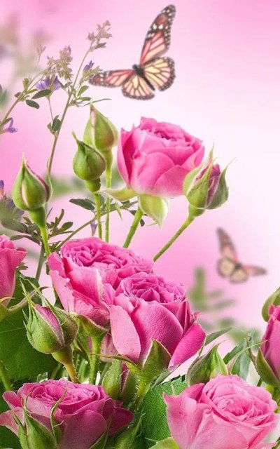 HD Rose Flowers Live Wallpaper - Android Apps on Google Play