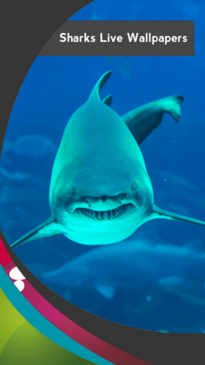 Sharks Live Wallpapers - Android Apps on Google Play