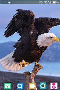 Bald Eagle Wallpaper - Apps on Google Play