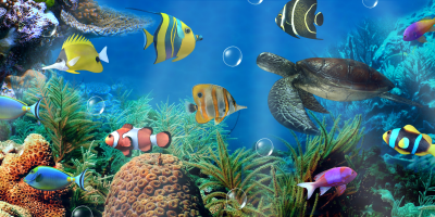 Aquarium live wallpaper - Android Apps on Google Play