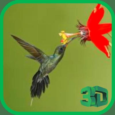 Download Hummingbird live wallpaper Google Play softwares - a7Aum0pQ0lql   mobile9