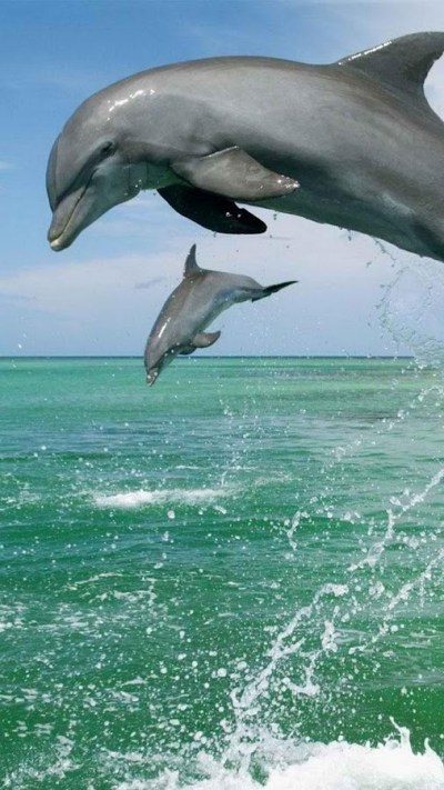 Dolphin Live Wallpaper 🐬 Pictures of Dolphins - Android Apps on Google Play