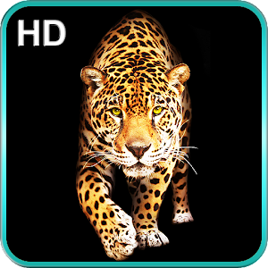 Cheetah Live Wallpaper - Android Apps on Google Play