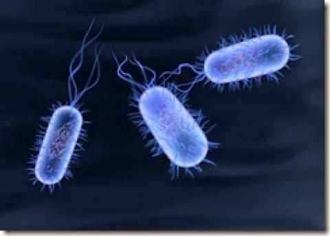 greg_bacteria