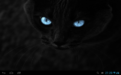 Black cats Live Wallpaper - Android Apps on Google Play