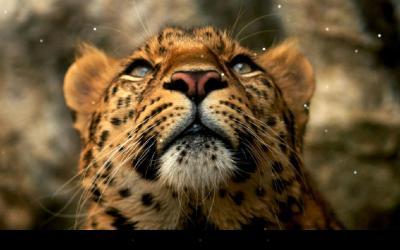 Leopard Live Wallpaper - Android Apps on Google Play