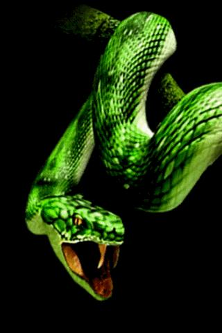 Snake Bite Live Wallpaper (android)   AppCrawlr