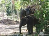 Baby Elephant-1.JPG