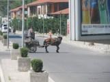 Horse & Cart-1.JPG