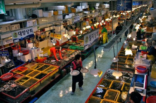 jalgachi fresh fish restaurant, where to eat seafood and sashimi in busan, fresh seafood restaurant