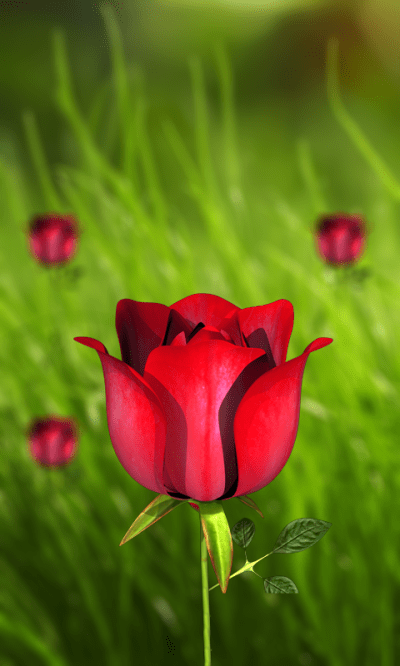 360 Flower live wallpaper 3D - Android Apps on Google Play