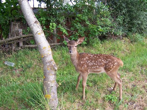 Fotos de naturaleza y fauna