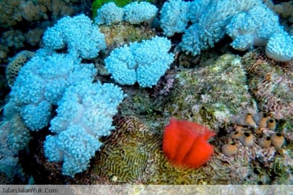 Indah banget kan perairan bawah laut Komodo?