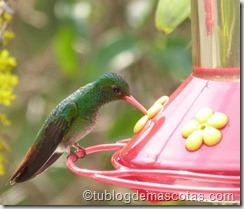 comedero para colibrí