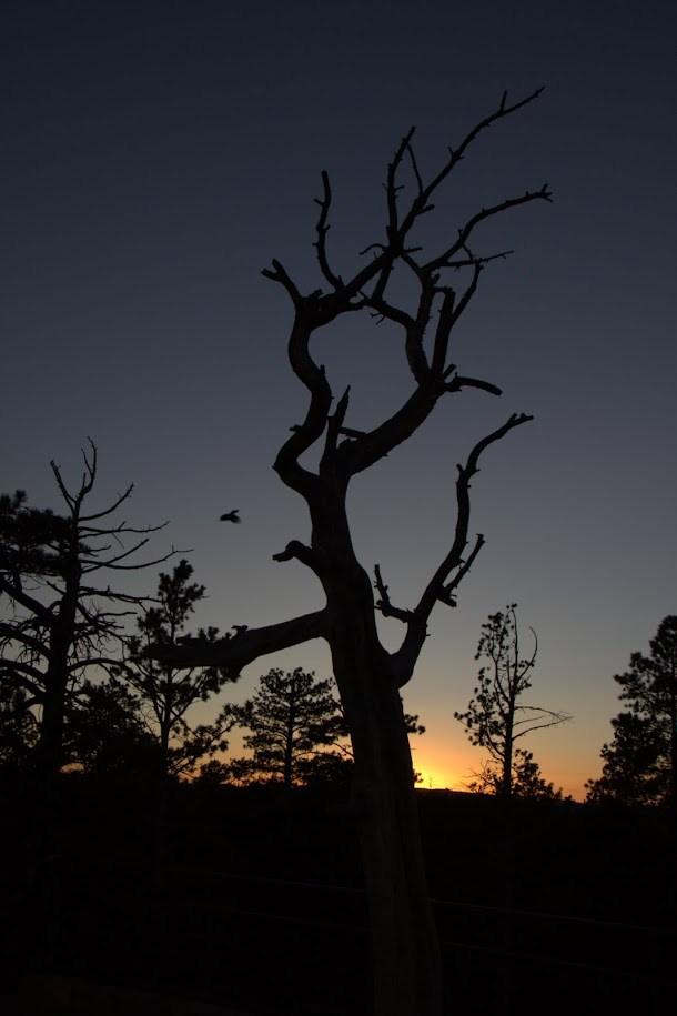 Grab Shot of Bird Flying Away From Tree