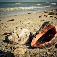 seashells in Vama veche | Fuji X10