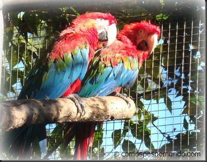 araras vermelhas_parque das aves