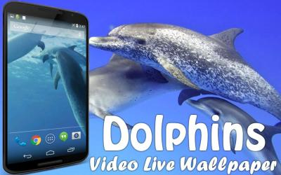 Dolphins Video Live Wallpaper - Android Apps on Google Play