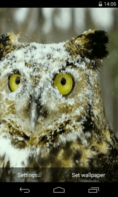 Owl Video Live Wallpaper - Android Apps on Google Play