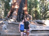 Grizzly Giant - Mariposa Grove-6.JPG